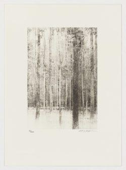 Árboles (fragmento I), Carlos Morago