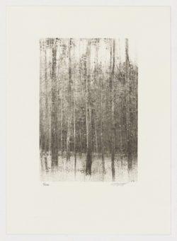 Árboles (fragmento II), Carlos Morago